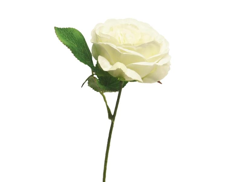 5 Englische Rosen (creme) – Kunstblumen mit je 1 Blüte und Blätter am Stiel – Gesamthoehe 28cm