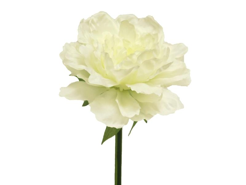 3 Peonien (creme) - Kunstblumen mit je 1 Blüte und Blätter am Stiel – Gesamthoehe 46cm