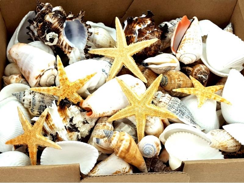 DEKOMUSCHEL BOX 1000g Bunter-Mix mit Seesternen Maritime Deko Muscheln