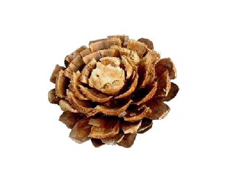 100 Stück Kiefernrosen gebleicht toll zum dekorieren und Basteln