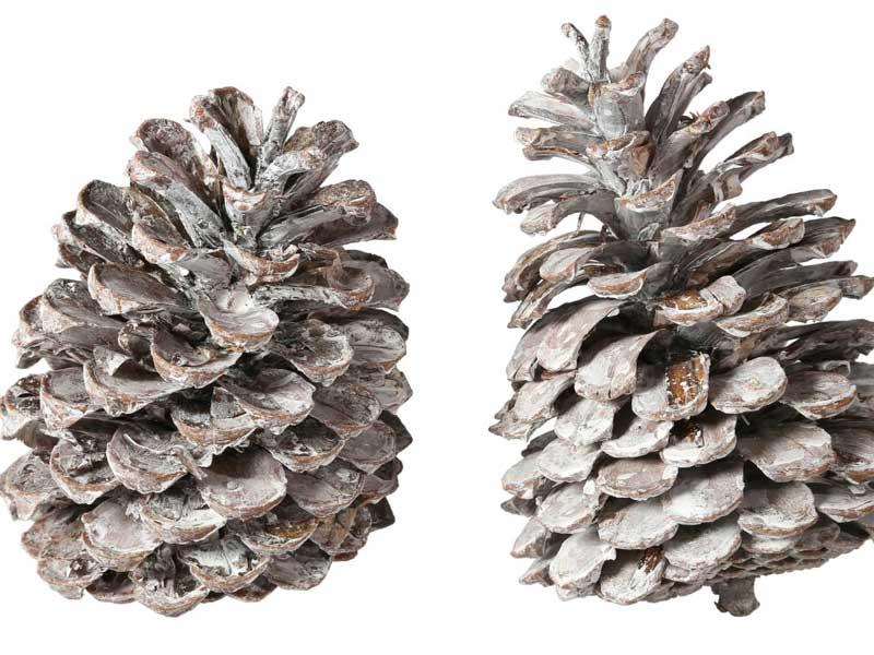 50 Stück große Maritima Zapfen WEISS gewischt – toll zum dekorieren und Basteln